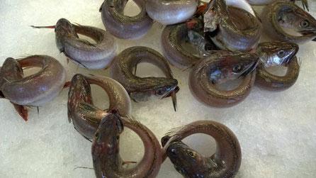 Seehecht,Pescada,Hake,Fisch,Peixe,Fish,Martins-Kulinarium,Algarve,Portugal