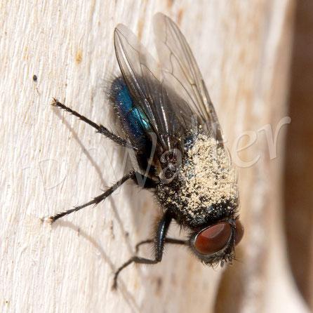 20.08.2017 : eine Fliege war in einem der Bohrlöcher !