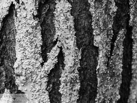 Makrofotografie einer Birkenrinde - Detailblick Fotografie