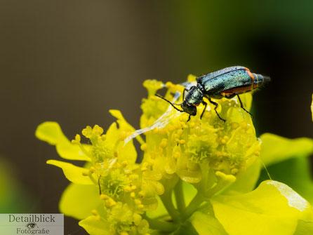 Makrofotografie eines Insekts auf einer Blume - Detailblick Fotografie