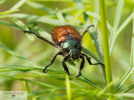 Makrofotografie eines Insekts auf Grashalmen - Detailblick Fotografie