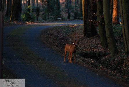 Gegenständliche Fotografie auf Detailblick Fotografie - Hund wartet auf Herrchen oder Frauchen auf einer Waldstraße