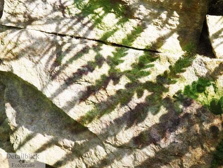 Doppelbelichtung eines Farns und dessen Schatten