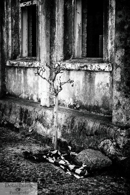 Baum vor Ruine