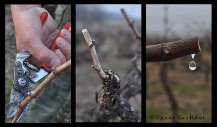 pruning-workshop-guided-wine-tours-tastings-Loire-Valley-vineyard-Vouvray-Touraine-Tours-Amboise-Rendez-Vous-dans-les-Vignes-Myriam-Fouasse-Robert