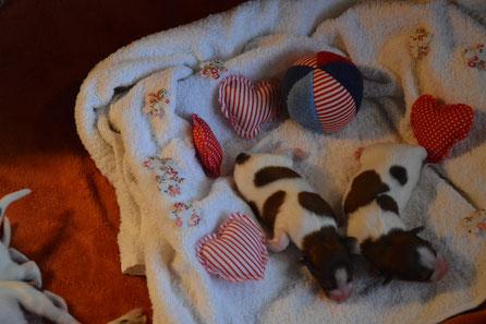 zwei Mädchen (links Puppy 1, Puppy 2 rechts)