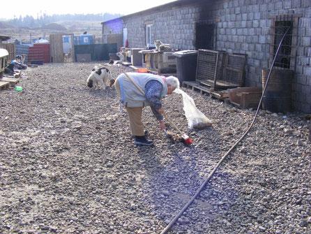 Frau Daje, die jetzige Präsidentin, beim Saubermachen im Tierheim (alter Standort)