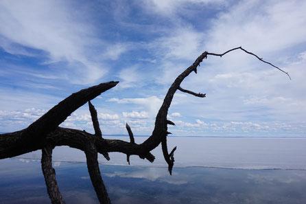 See zugefroren, Baumstamm, psychische Gesundheit