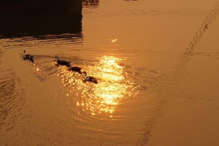 Sonnenuntergang, Enten