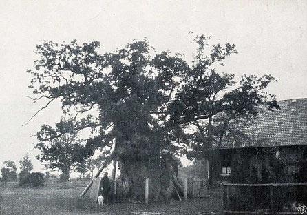 Femeiche Erle um 1900, Albert Weskamp (1861–1931)