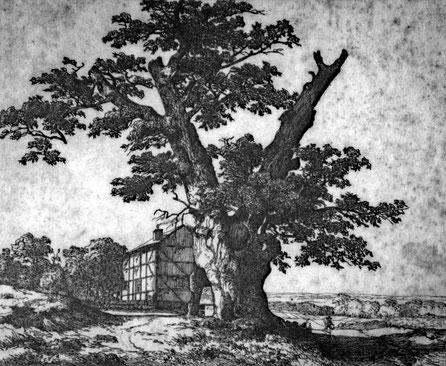 Dagobertseiche in Dagobertshausen, Kupferstich, Ludwig Christian Wagner, 1838