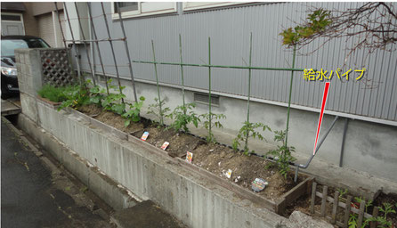 南側の生け垣撤去で菜園。畑欲しいなぁ