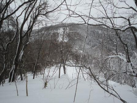 山麓の旧スキー場ゲレンデ?