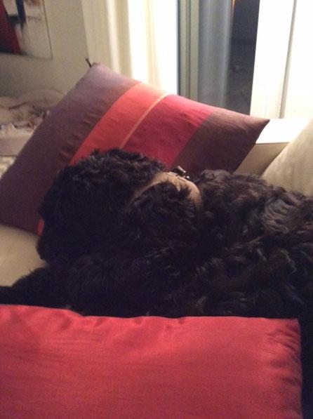 Tochter GIOIA nach dem Besuch bei Mama - hundmüde :)