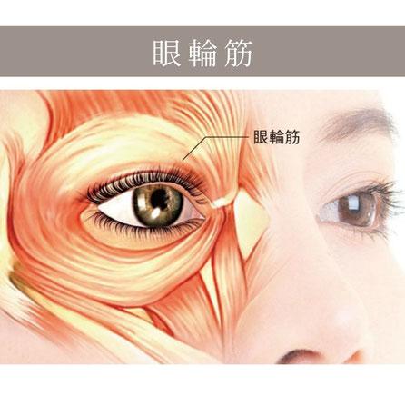 眼輪筋の衰えは目元のたるみ原因