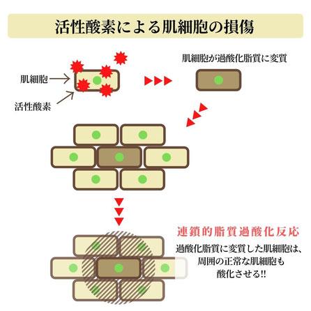 活性酸素による肌細胞の損傷