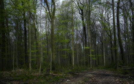 forest / april...