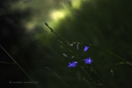 blue / light...
