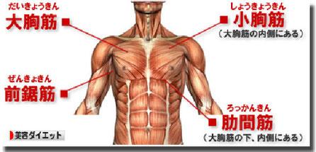 肩こりの場合は鎖骨下、胸上部にも触れます