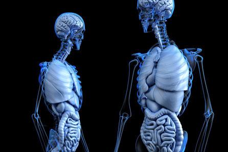 Innenansicht menschlicher Körper