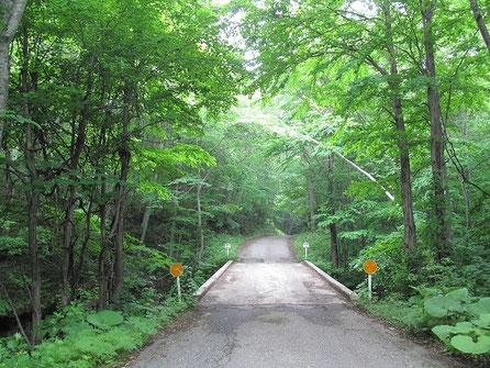 早朝の深い森の中をオープンで走る。気持ちイイ。