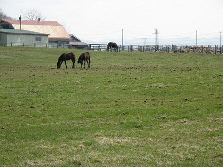 苫小牧を過ぎた辺りからは競走馬の馬産地で、牧場が至る所に