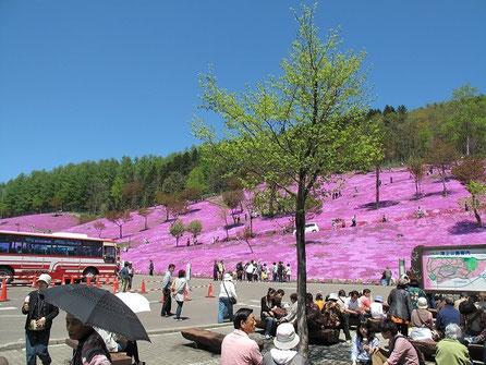 11:25  途中滝上で芝桜の祭りをやっていたので立ち寄る。入場料一人500円
