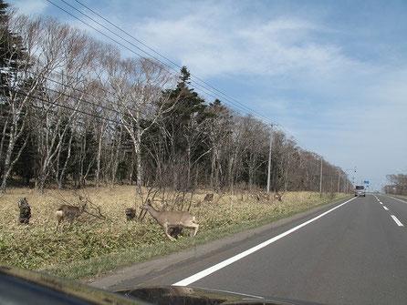 鹿には気をつけましょう。この季節は葉が少ない為見通しがよいのがいい。