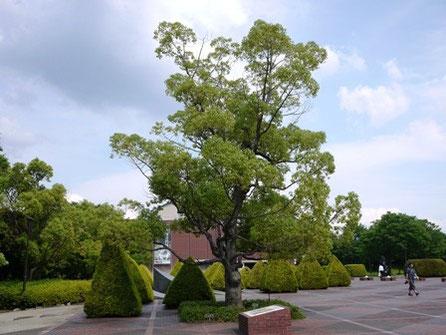 樹容の美しい木