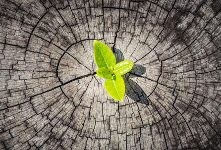 Wahl Partners. langjährige internationale Erfahrung im Aufbau und Management von Start-Ups Unternehmen und Projekten.