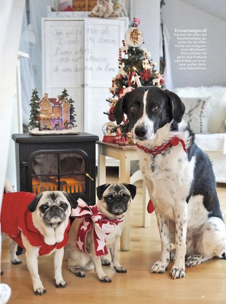(Bild oben) Weihnachten 2018 - Magazin LANDLEBEN (Germany)