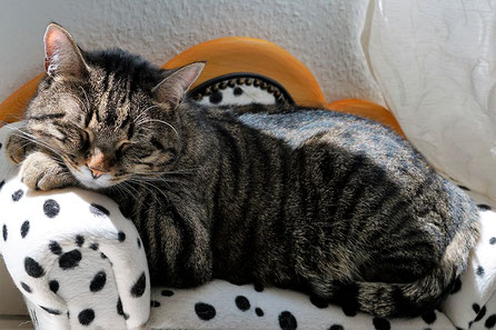 Tierbedarf für Hunde, Katzen und weitere Lieblinge