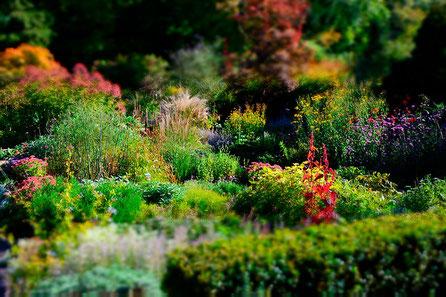 Heckenpflanzen, Sträucher, Stauden, Wasserpflanzen und vieles mehr