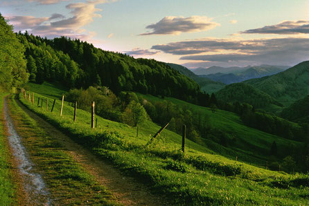 Hikers in the Black Forest, Baden-Wuerttemberg, Germany, near Basel