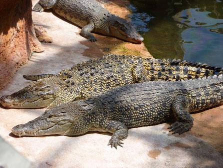 planète_des_crocodiles