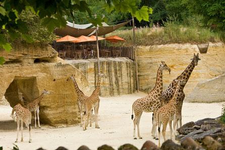 zoo_doué_la_fontaine