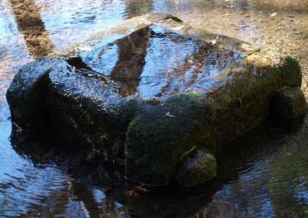 1月26日(2016) 木立のなかの湧水:1月20日、小金井市立はけの森美術館の美術の森にて