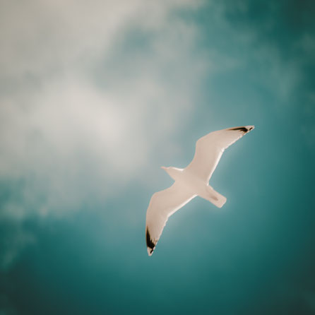 Möwe, seagull, Nordsee, Juist, Insel, North Sea, Holger Nimtz, Fotografie, photography,