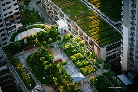 Auch begrünte Dachterrassen sind gut für's Klima und heben die Wohnqualität erheblich an.