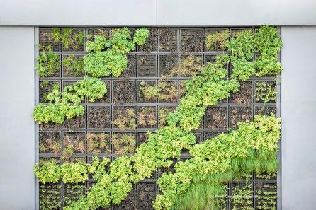 Ein vertikaler Garten sieht nicht nur schön aus. Er bietet Schallschutz von der Straße und filtert den Feinstaub aus der Luft.