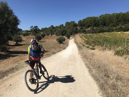 Fahrradfahrer, Mountainbiker, Rucksack, Deuter, Schatten, Sonne, Weg, blauer Himmel, Weinreben in Portugal,  Oliven, Olivenhain, Schattenwurf, Mountainbike, Wartezeit, Wegebeschaffenheit, Schotter, Trikot, Fahrradhose, Helm, Fahrradhelm, Helmpflicht,