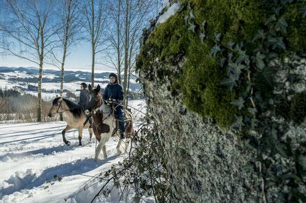 Winterreiten, Schneereiten, Pulverschnee