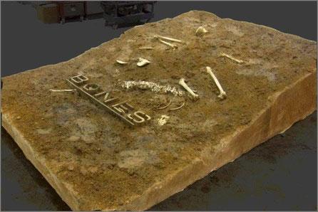 Restos humanos, Huesos, para FOX (Bones) tienda efímera promocional para sus series.