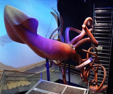 Corporeo de Calamar Gigante Acuario Atlantis / Xanadú