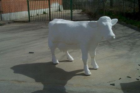 Vaca, Vaquiila