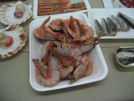 Ficticios de langostino, sardinillas, vieras... para Museo del Mar, Vigo