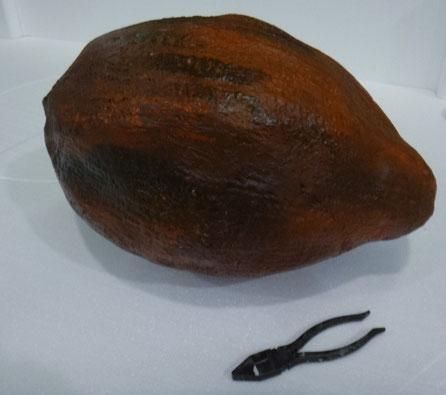 Fruta del Cacao (50 cm)