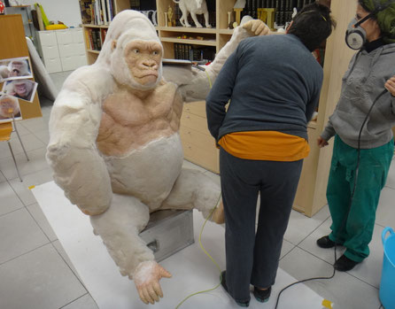 Gorila Albino, Copito de Nieve, par ala recepción de un hotel en Africa.
