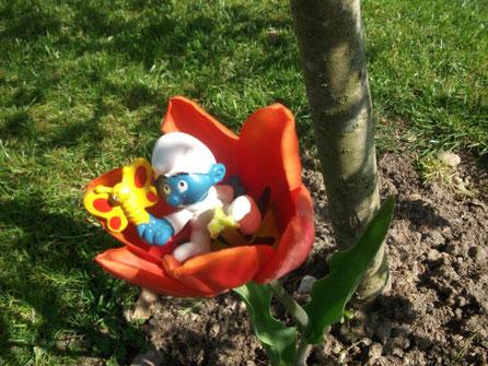 Le bébé schtroumpf dans sa tulipe