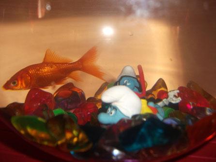 Schtroumpfs dans l'aquarium